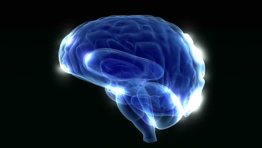 Animated human brain - photo#14