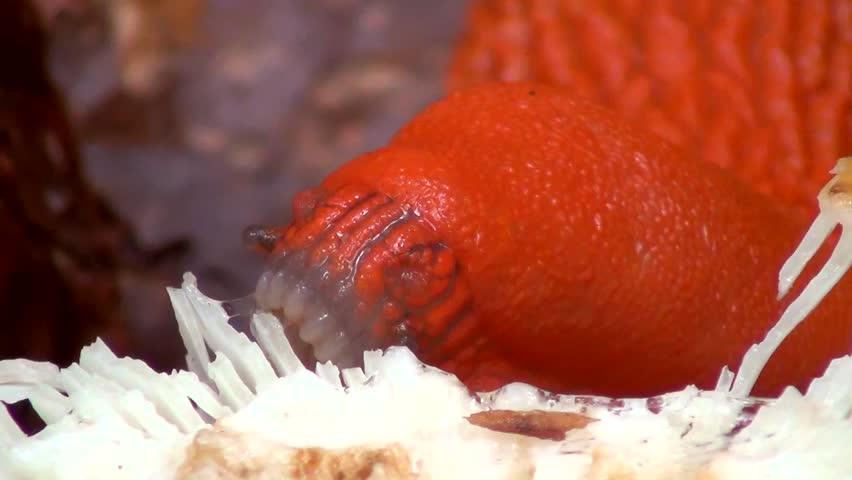 sea slug mouth stock footage video 3513176 shutterstock