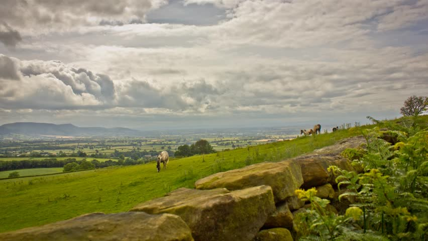 Horses Grazing in England Rolling Green Fields Timelapse