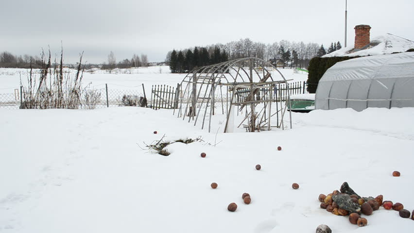 panorama of wooden diy homemade polythene greenhouse covered with snow and rotten apples in winter garden. snow falling. - HD stock video clip