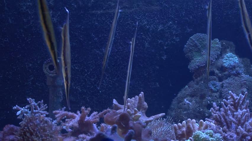 In a aquarium fish swim vertical stock footage video for Vertical fish tank