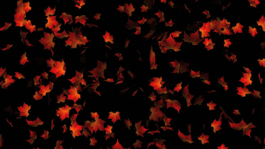 orange maple leaves falling and rotating  - HD stock video clip