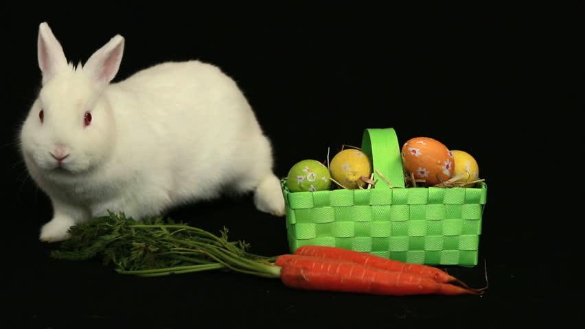 bunny rabbit sniffing around - photo #24