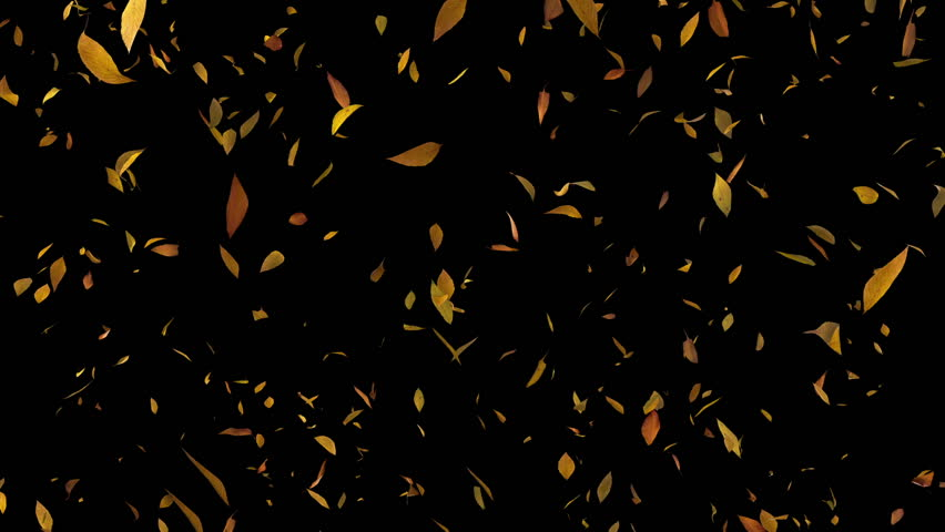 Loop-able animation of falling leaves | Shutterstock HD Video #3572651