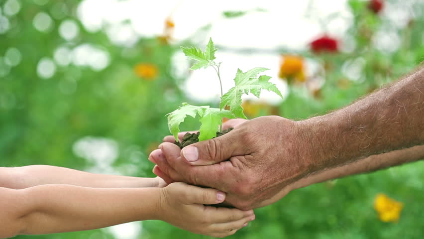 Senior man and child holding maple tree plant in hands against spring green background. Ecology concept. Slow motion | Shutterstock HD Video #3650969
