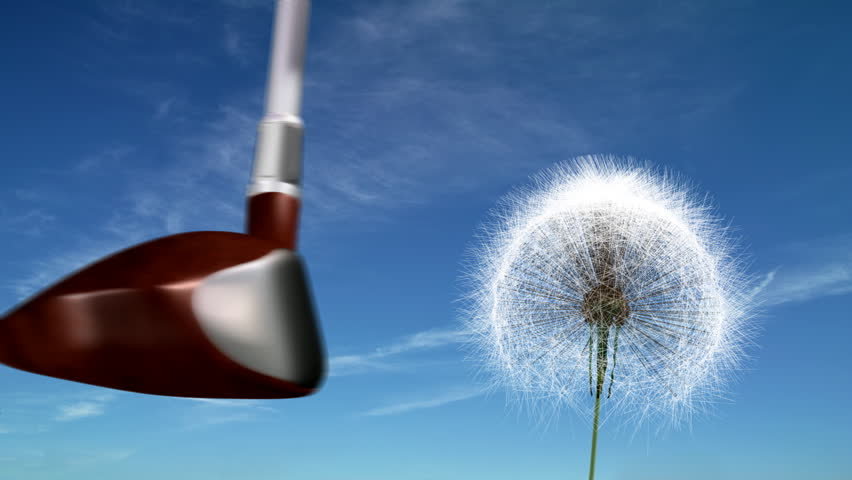 Golf club hits a dandelion. The head of a golf club smashes into a dandelion sending the seeds flying. - HD stock footage clip