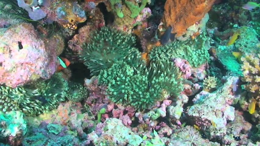 Various Papua New Guinea Manus Bougainville