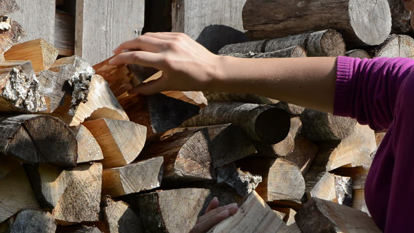 woman hand pick up collect dry chopped firewood for burn fuel.