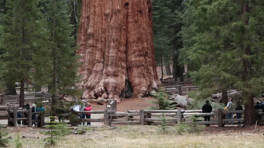 SEQUOIA NATIONAL PARK, CALIFORNIA APR 2013: Tourists Sequoia National Park General Sherman Tree. Sierra Nevada mountains east of Visalia. Established September 25, 1890. The park spans 404,063 acres. - HD stock video clip