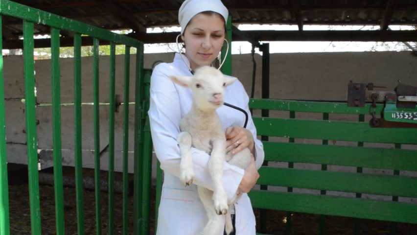veterinarian holding a lamb on the farm