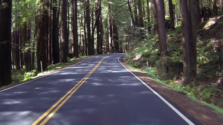 Beautiful drive through California Redwood forest Point Of View. Sequoia National Park Sierra Nevada mountains. Established 1890. 404,063 acres. Famous largest trees on earth, giant sequoia trees. - HD stock footage clip