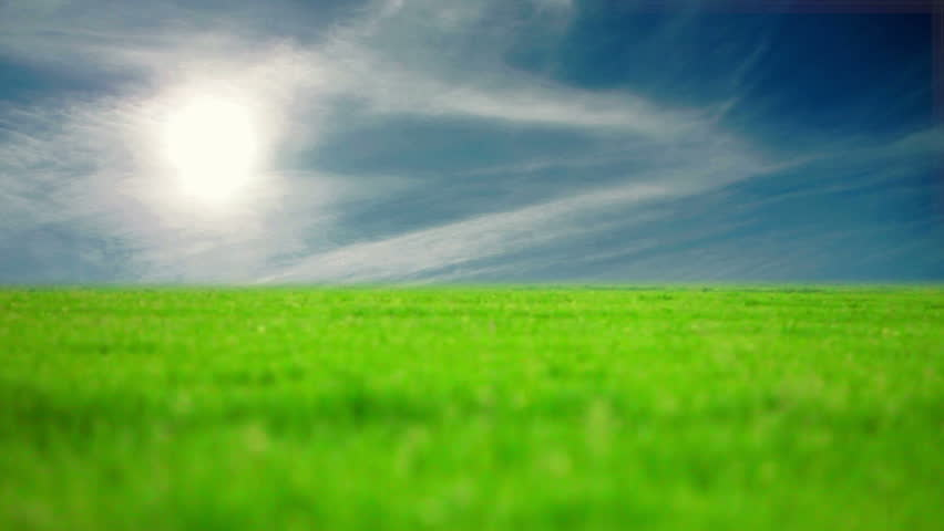 field of grass and perfect sky - HD stock footage clip