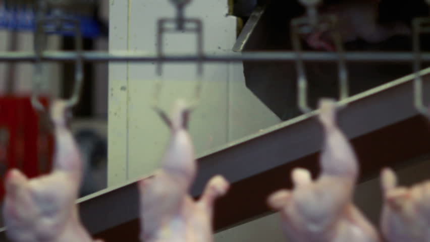 Chicken carcasses on the production line