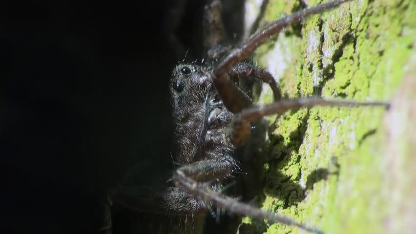 spider macro - HD stock footage clip