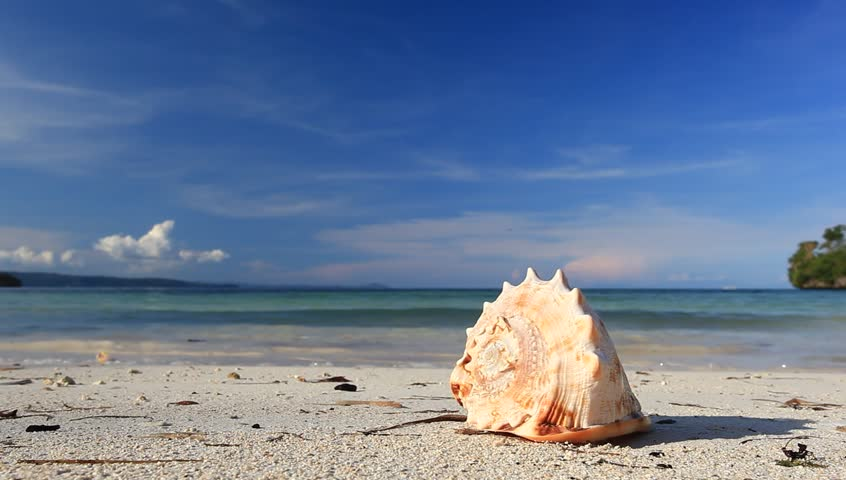 Seashell on tropical beach, Philippines, Boracay