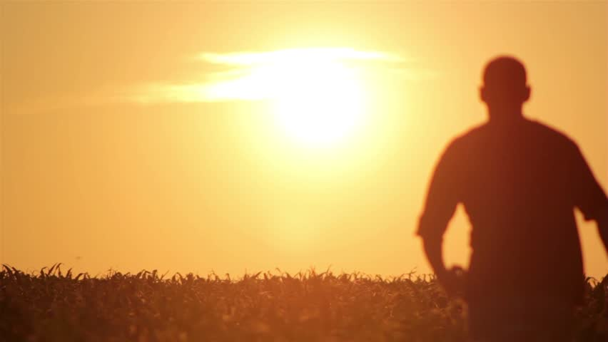 silhouette of a man at sunrise,silhouette of a man walking at sunrise - HD stock video clip