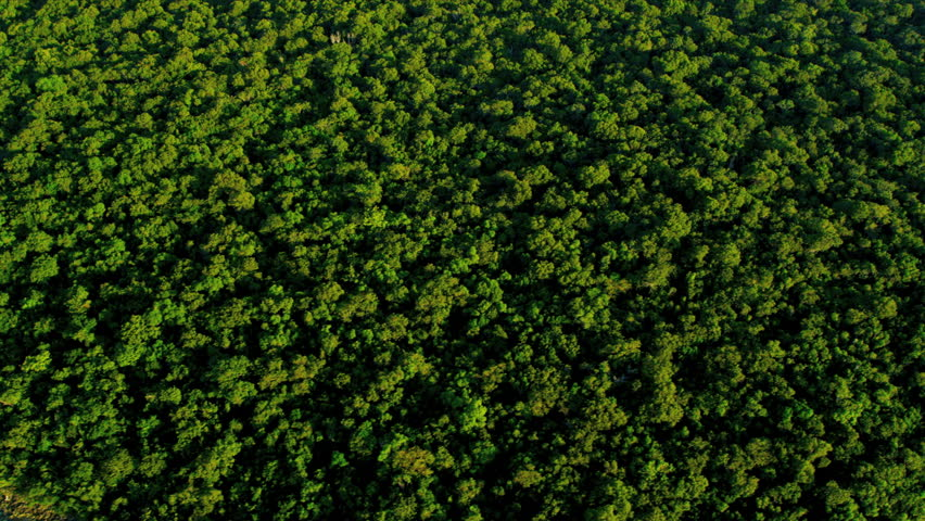 Aerial Tree Canopy Stock Footage Video 2024677 Shutterstock