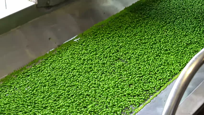 peas in processing ; fresh peas in the production and processing on the factory a conveyor belt,video clip - HD stock video clip