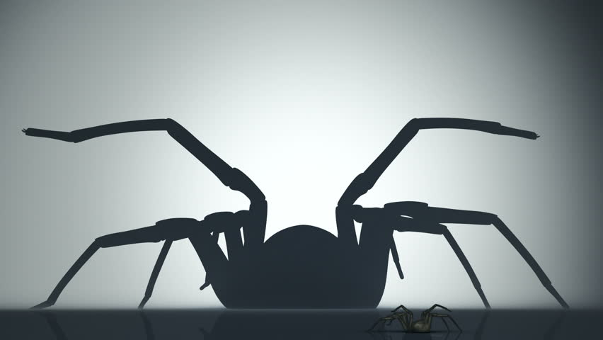 Big venomous spider watching his shadow on the wall. Animation of backlighted spider. - HD stock video clip