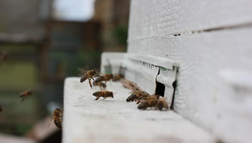 视频酒蜂蜜正版-站酷海洛创意素材图片,视频,音视频小吃福鼎图片