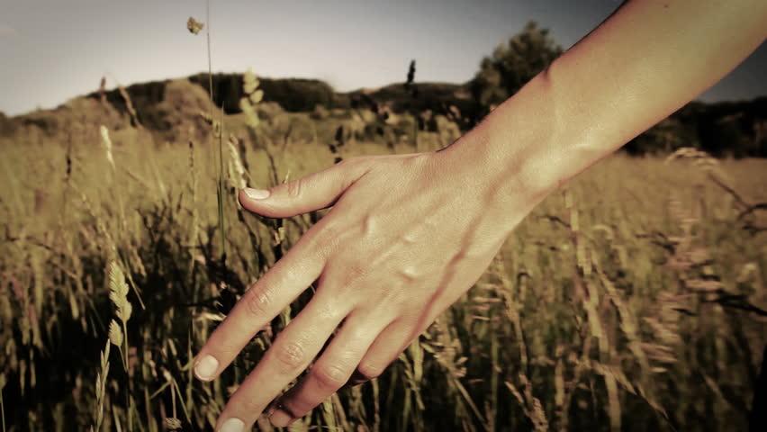 Woman walking touching long grass in field in summer - sepia style grading in slow motion