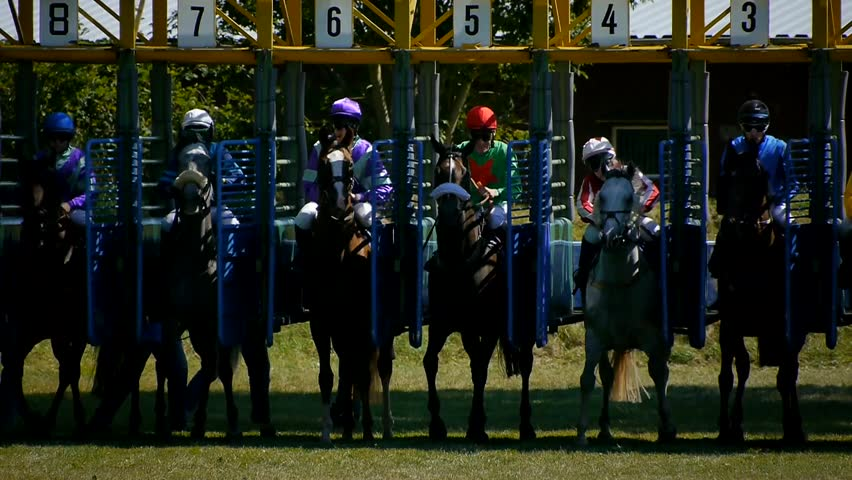 SAARBRCKEN - AUG 15, 2013: Horse racing in Germany. Part 5. Starting gate (Slow Motion)