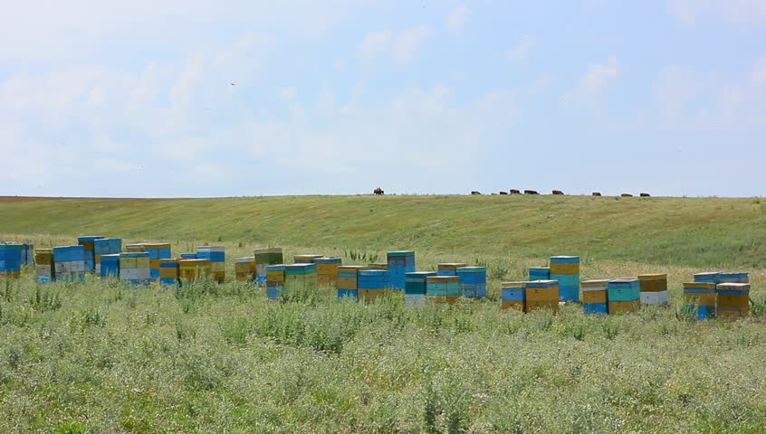 beehives in field - HD stock video clip