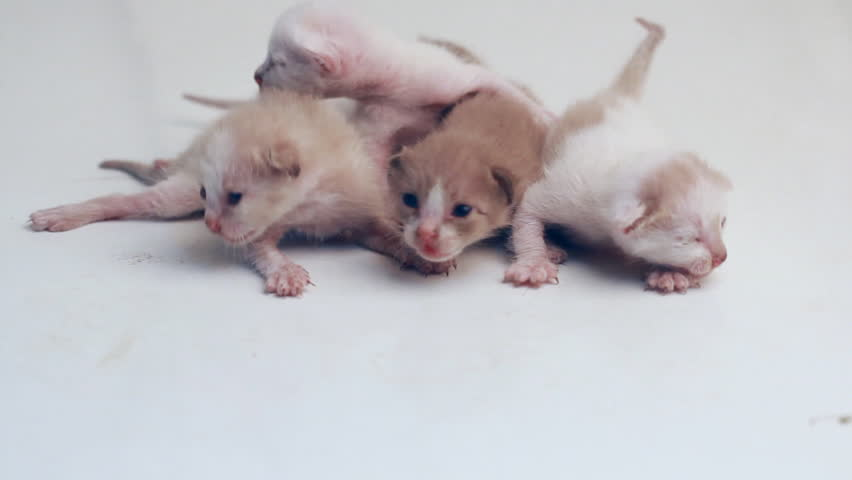 Little newborn kittens try to walk on white background - HD stock video clip