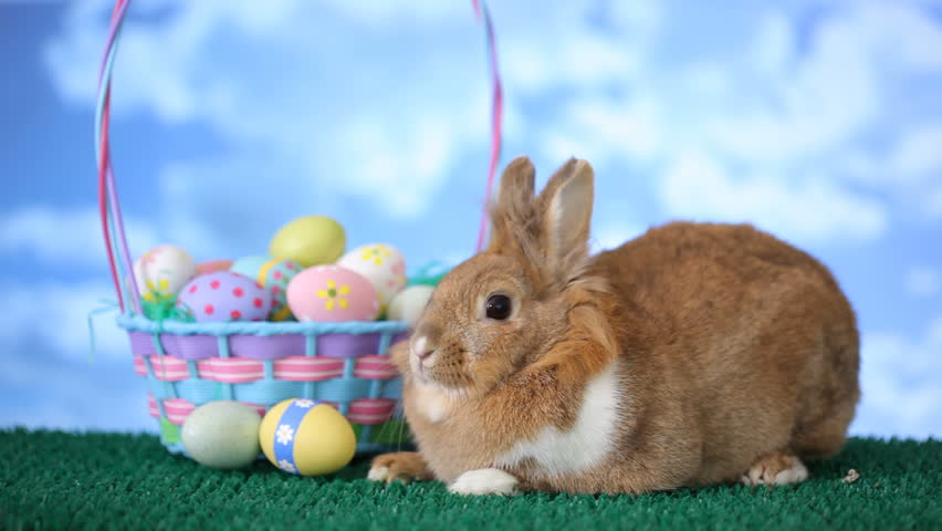 Easter bunny and basket with eggs - HD stock footage clip