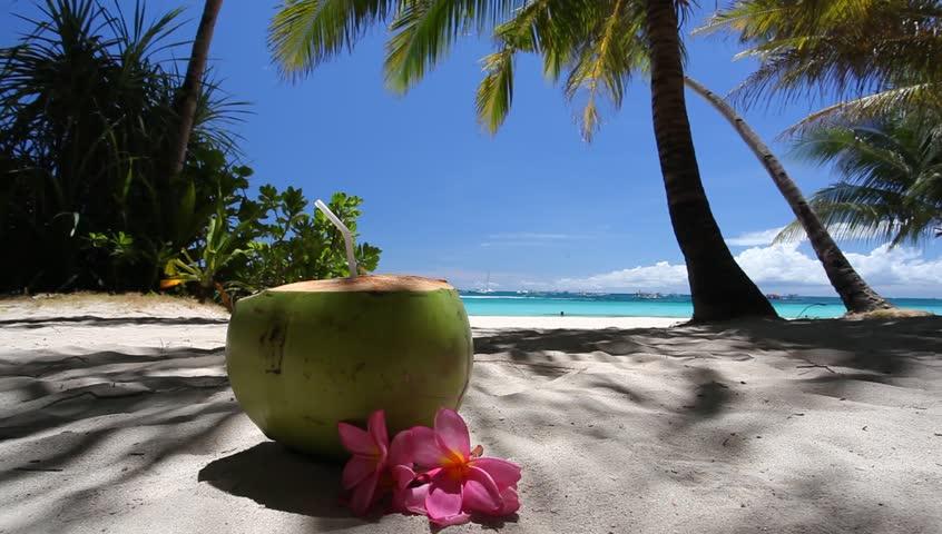 Fresh coconut on caribbean beach, footage