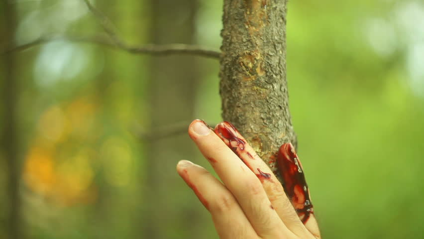 bloody injured hand in a forest.