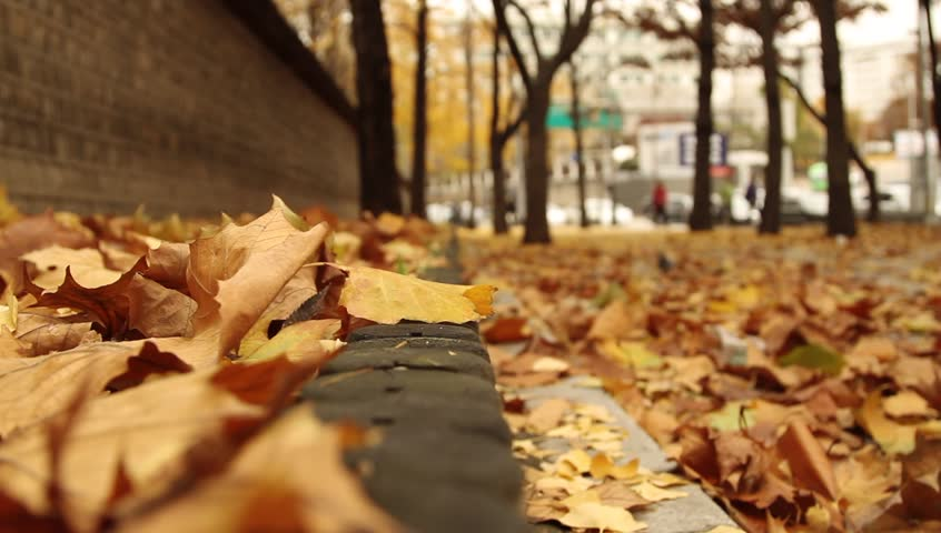 Autumn scenic : People walking on street with fallen leaves
