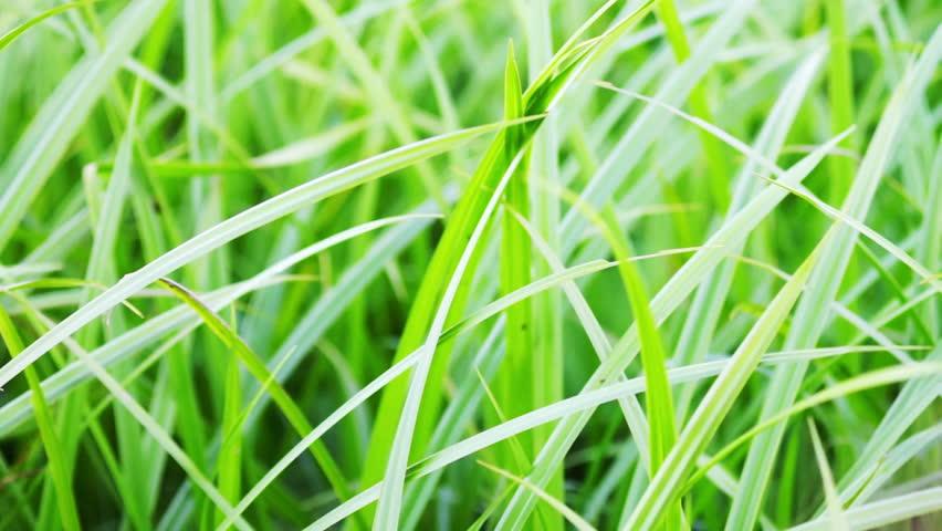 Summer meadow grass - HD stock video clip