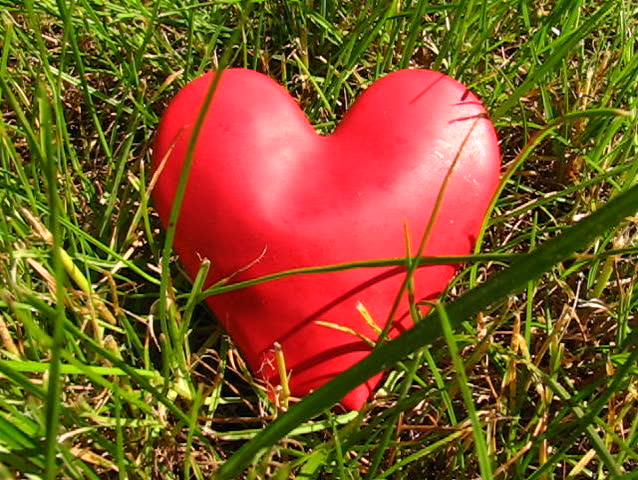 Love on the grass