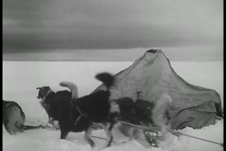 1940s - Eskimos hunt for caribou in the late 1940s.