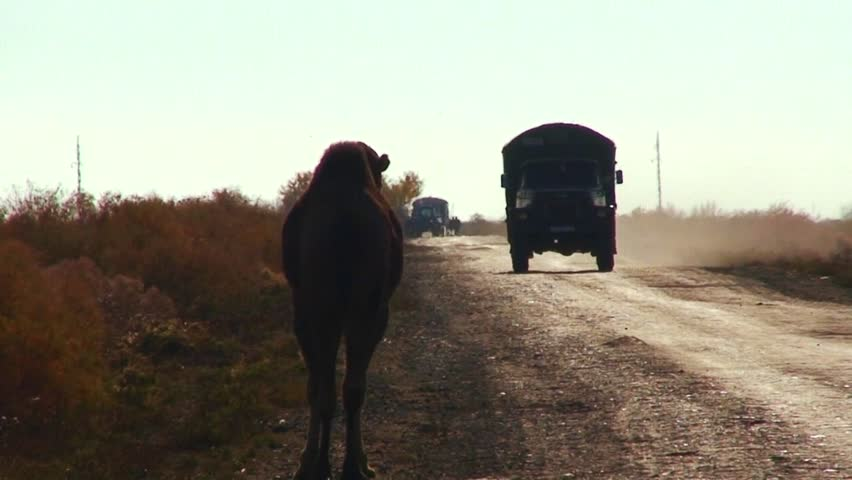UZBEKISTAN-CIRCA 2012-An old Soviet era cargo truck passes on a road into Muynaq in Uzbekistan passing camels. - HD stock footage clip
