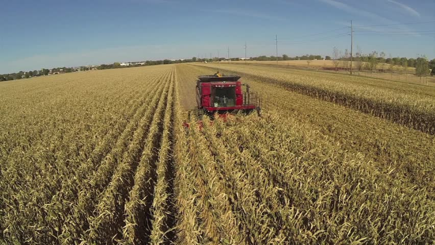 Aerial shot from low to high of a combine harvesting corn.