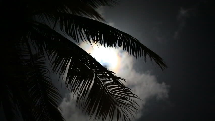 Full moon on a tropical night, silhouette palm trees