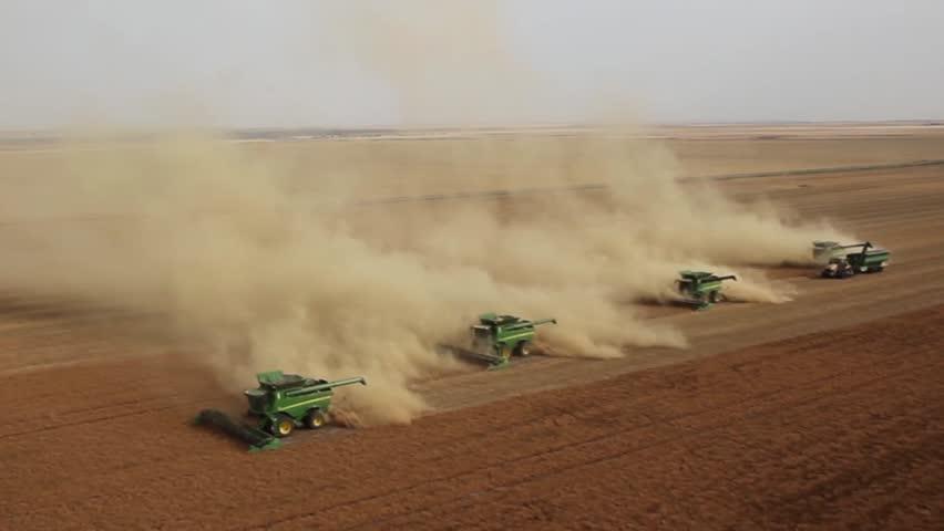 Four combines harvesting lentil field on the Saskatchewan Prairie