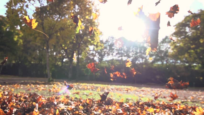 autumn leaves falling in slow motion. colorful fall season. 1920x1080 hd