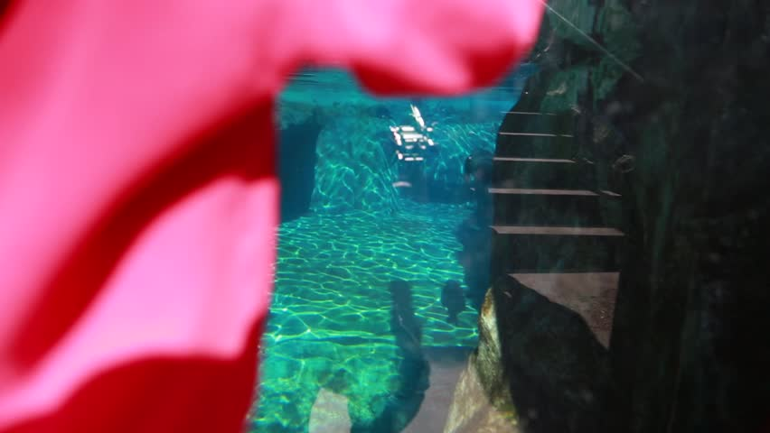 Little kids watching the seals swimming in an aquarium at the zoo