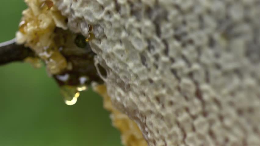 图片酒视频视频-站酷海洛创意蜂蜜素材,正版,音吻的视频妈妈图片