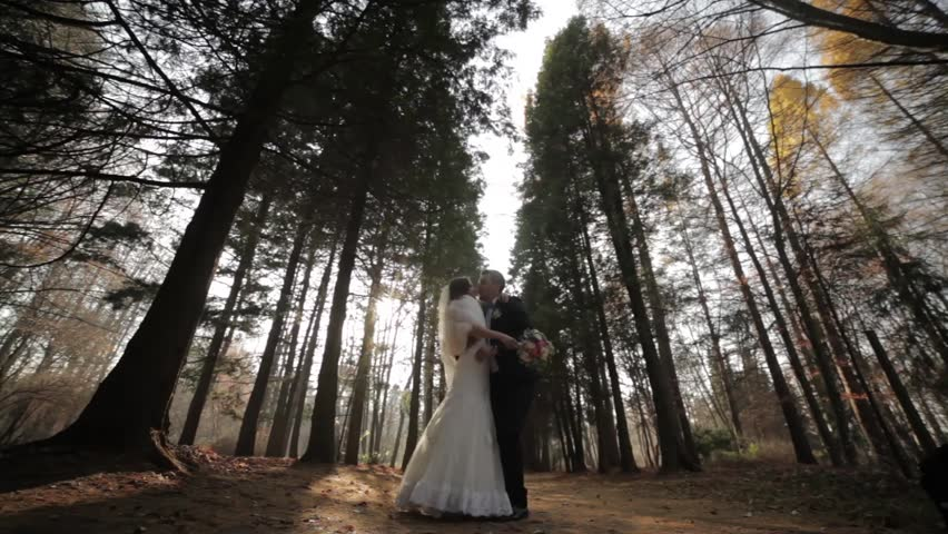 Wedding couple in a pine forest.