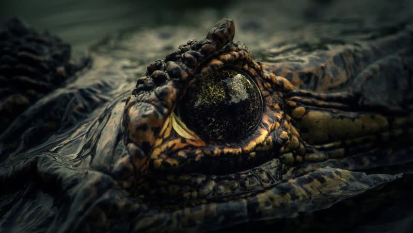 Alligator´s eye (super slow motion)