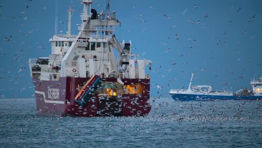 GRUNDARFJORDUR, ICELAND - NOVEMBER 2013 - Ships fish for herring close to shore near the town of Grundarfjordur, Western Iceland