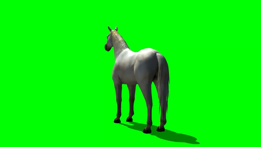 White horse in trot animal green screen video footage | Shutterstock HD Video #5285810