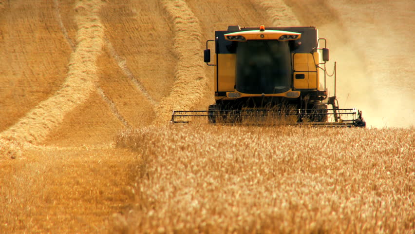 Combine harvester gathers the wheat crop - HD stock footage clip
