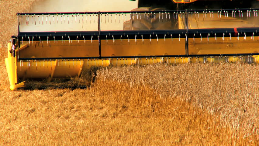 Combine harvester gathers the wheat crop - HD stock video clip