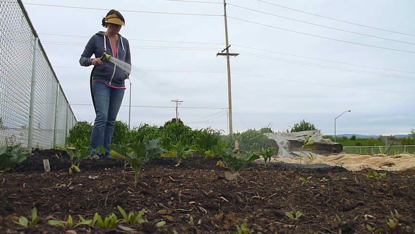 Woman Watering Vegetables At Community Garden In Portland