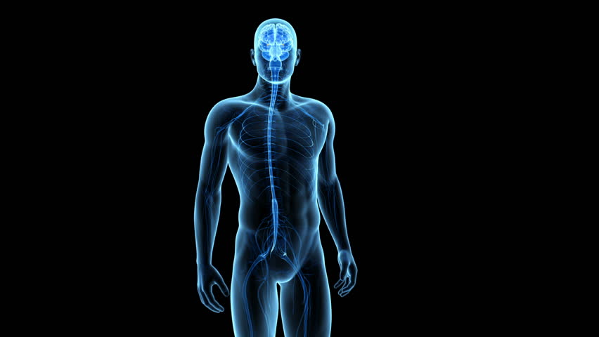 medical animation showing the amygdaloid body - HD stock footage clip